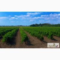 Продам виноградники 56 Га в Темрюкском районе