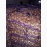 Картошка оптовые продажи