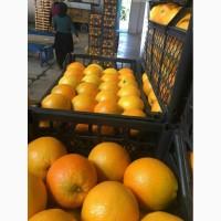 Апельсин в наличии. Апельсины оптом. Фрукты оптом