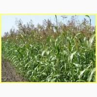 ООО НПП «Зарайские семена» закупает суданской травы от 20 тонн