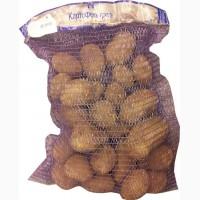 Закупаем на Фуд Сити картофель