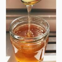 Мед от алтайских производителей (разные сорта)