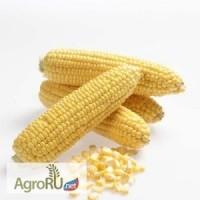 Карамелло F1, семена сахарной кукурузы, 1 кг