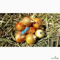 Лук репка оптом новый урожай 2017