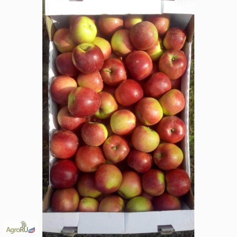 яблоки оптом краснодарский край известны победители конкурса