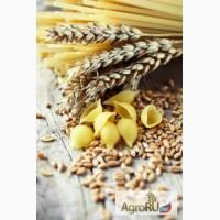 Яровую пшеницу!Нут