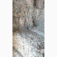 Продаем сено