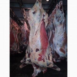 Продам говядину