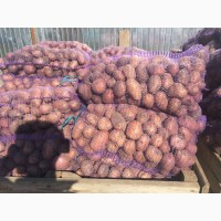 Картофель оптом от производителя.Стоимость 16, 5 рублей за 1 кг