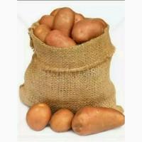 Картофель оптом продовольственный