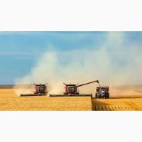 Продаем пшеницу фураж. и прод., кукурузу, ячмень, овес, рапс