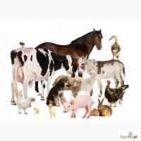 Ищу компаньона - инвестора для создания животноводческого комплекса в Крыму