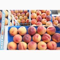 Отличные персики оптом по всей стране