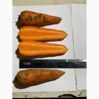 Продаём Морковь свежая оптом в Москве