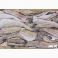 Минтай б/г. Свежемороженая рыба