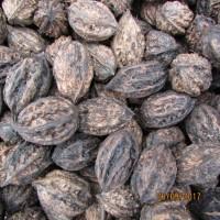Продам орех манжурский