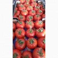 Высококачественный сорт помидоров Ламия в продаже по выгодным ценам