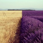 Продаём пшеницу 3 кл