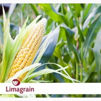 Гибриды кукурузы ЛИМАГРЕЙН (LG)