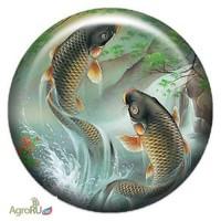Живая Рыба для пруда