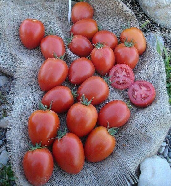семена 1000 томатов