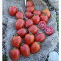 Семена томата Намиб F1 1000 шт