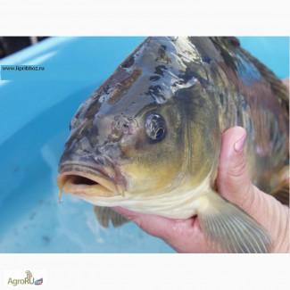 Живая рыба, малек