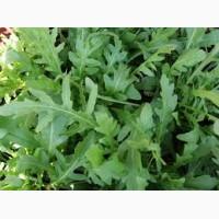 Продаю зелень из Узбекистана ( лук, укроп, петрушка. кинза )