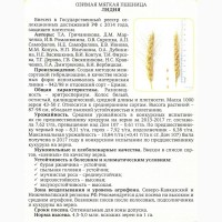 Семена озимой пшеницы сорт Лидия