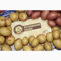 Элитный семенной картофель урожая 2019 г