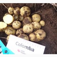 Семенной картофель Коломба