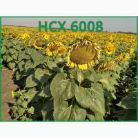 НСХ 6008 подсолнечник: подробное описание, характеристики, цена
