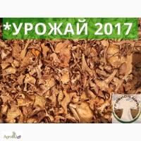 Продам гриб лисичка сушеная