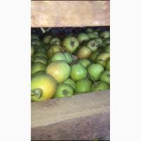 Яблоки Семеренко 2 сорт от производителя