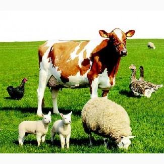 Корма и кормовые добавки