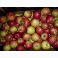 Закупаем яблоки большим оптом калибра 5+ и выше