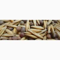 Семена вико-овсяной смеси закупка на пост основе