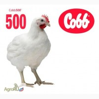 Инкубационное яйцо бройлера, индейки, утки и гуся крупным оптом от производителя