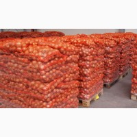 Купим лук репчатый оптом от 20 тонн