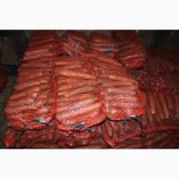 Морковь оптом, размер 12-25 см