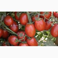 Продам томаты от производителя