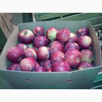Яблоки первого сорта купим.Самовывоз
