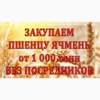 Закупаем пшеницу 4 класс протеин 12, 0 и 12, 5