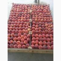 Готовы к оптовой реализации персики с доставкой по РФ