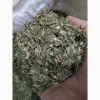Ландыш майский трава, лист, цвет