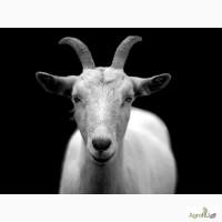 Корм для коз экструдированный