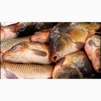 Рыба свежая и свежемороженая по привлекательной цене