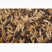 ООО НПП «Зарайские семена» реализует семена вико-овсяной смеси оптом и в розницу