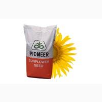 Семена подсолнечника ПИОНЕР П63ЛЕ10 (PR63LE10)