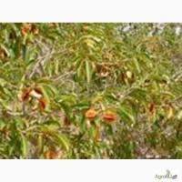 Кинкелиба. Растительные чаи. Оптовые поставки пищевой продукции из Западной Африки
